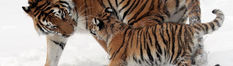 NC Stratégie, Zoo des Cantons-de-l'Est